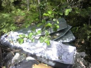 Под Всеволожском в лесу нашли гробы